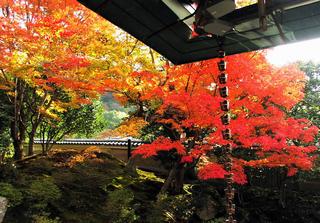 京都 紅葉 7 ブログ用.png