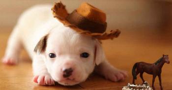 可愛い動物 2 犬 ブログ用.png