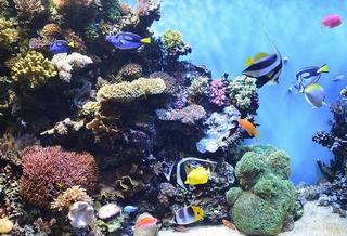 ステキな熱帯魚 1 ブログ用.png